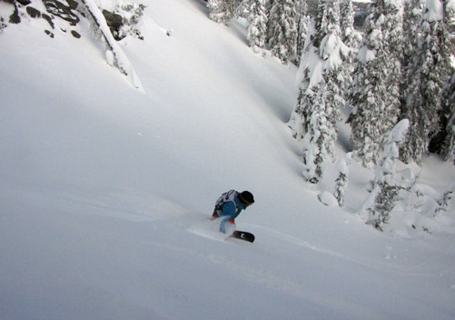 Fernie Cat Skiing - Day Trips