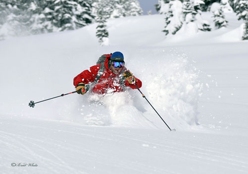 Revelstoke Cat Skiing - Mustang Powder
