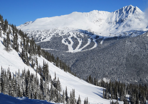 Whistler Blackcomb has terrain below and above the treelike