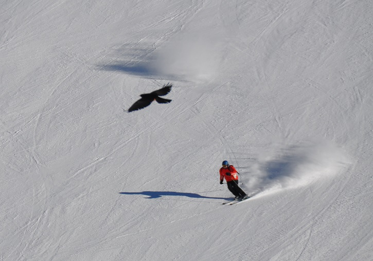 Great snow and black crows down Buggelpiste at Hintertux.