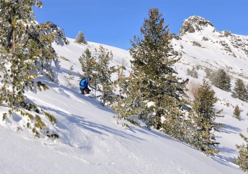 SF Freeride Cat Skiing