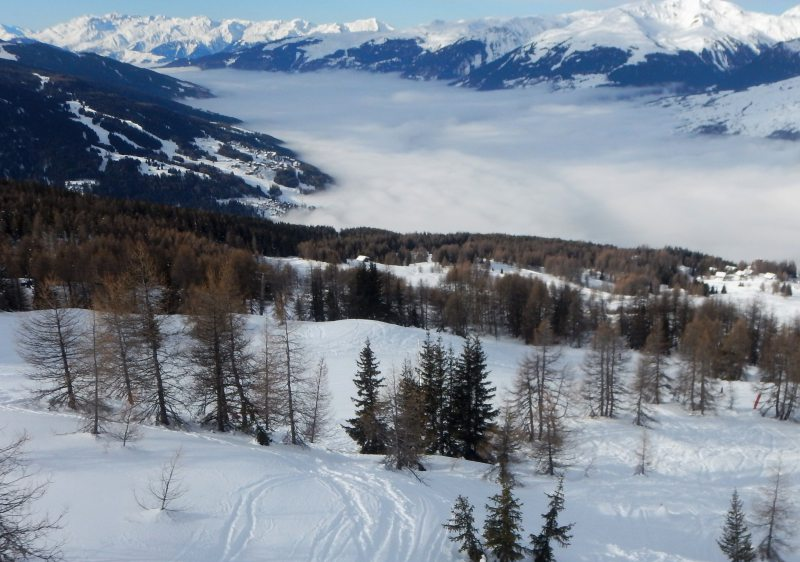 The trees of Peisey Vallandry provide diversity & shelter at Les Arcs.