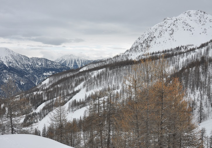 Or tree ski in France amongst Serre Chevalier larch forests.