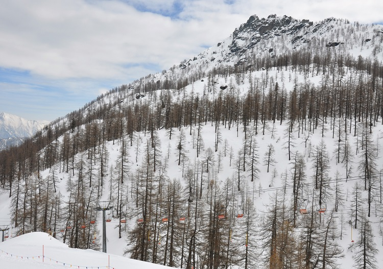 Champorcher larch forests & tree skiing.