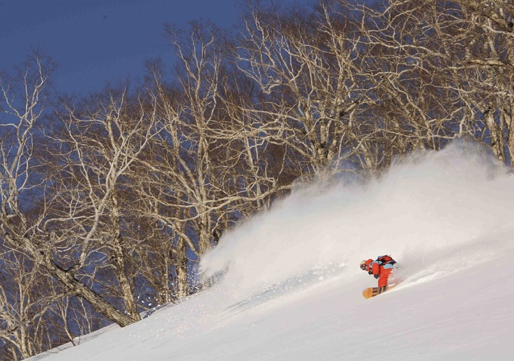 Trees and powder at kamchatka. (photo - 9 Vallees)