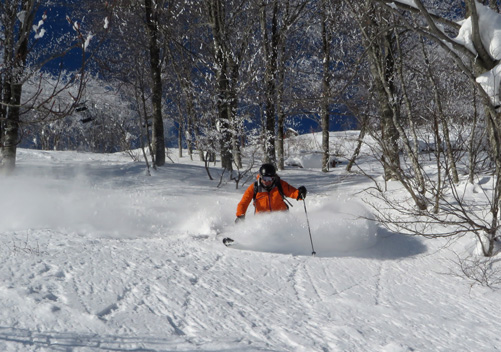 Hakuba Cortina allows tree skiing