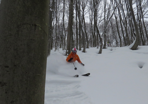 Some of the beautiful tree skiing