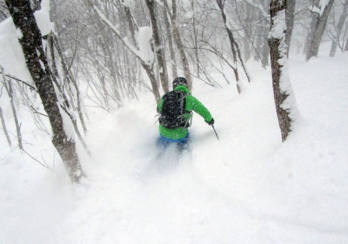 Tree skiing galore in Tohoku