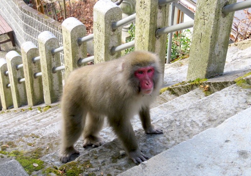 Yudanaka is famous for its snow monkeys often found wandering the streets