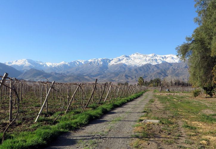 The Los Andes valley is one of the regions grape growing areas